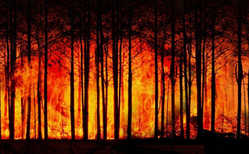 Le réchauffement climatique et les feux de forêts